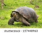 Stock photo a giant galapagos turtle galapagos islands ecuador south america 157448963