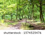 Green Trees In Sherwood Forest. ...