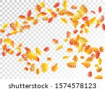 oak  maple  wild ash rowan... | Shutterstock .eps vector #1574578123
