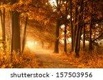golden sunbeams of autumn on a... | Shutterstock . vector #157503956