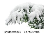 Fir Branch Heavily Covered Wit...