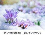 Beautiful Spring Flowers...