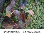 Close Up Autumn Leaves On...