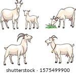 Set Of White Goats. Vector...