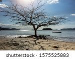 Dry Tree In Winter From Pontal...