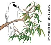australian kookaburra sitting... | Shutterstock .eps vector #157581608