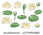 Green Lily Pads With Lotus...