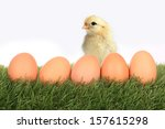 Little Chicken And Five Eggs