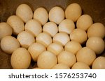 Ostrich eggs are the largest of any living bird in the world.The ostrich egg weight is close to 1.5kg and the colour ranges from pearl white to cream. The egg shell is 3mm thick and quite strong