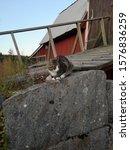 Cat Sitting On A Big Grey Stone ...
