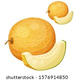 melon. cartoon icon isolated on ... | Shutterstock . vector #1576914850