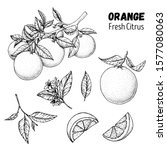 Orange Fruit Hand Drawn...