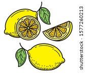 hand drawn lemon vector... | Shutterstock .eps vector #1577260213