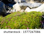 Rock Covered In Moss And Small...
