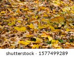 colorful fallen leaves from... | Shutterstock . vector #1577499289
