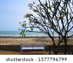 View Of Branch Tree With Empty...