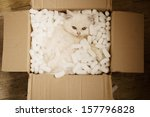 Stock photo adorable white persian kitten in a cardboard box 157796828