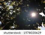 Bright Sun Burst Seen Through...