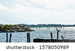 Sea Gulls Enjoying The Remnant...