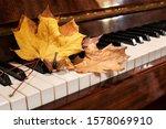 Autumn Maple And Oak Leaves Lie ...