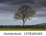 Single Tree With A Stone Wall...