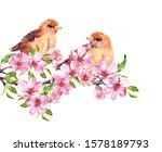 Birds Sitting On Apple Tree...