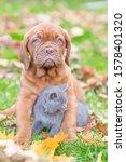 Puppy Hugs A Kitten On Autumn...