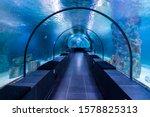 Fish Blue Aquarium Underwater...
