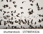 Autumn And Spring Migrations Of ...