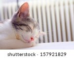 Stock photo  grey and white kitten sleeping with its head resting on its paws 157921829