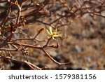 Tiny Yellow Flower Blooming On...