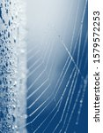 Small photo of Beautiful cobweb with drops at sunrise. Early morning and cobweb with drops. Trend blue color