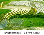 terraced rice field in water... | Shutterstock . vector #157957280
