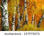 Beautiful Nature Landscape  ...