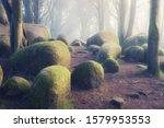 Beautiful Mystical Forest In A...