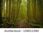 a pathway through the dense... | Shutterstock . vector #158011580