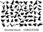 set of 60 silhouettes of birds   Shutterstock .eps vector #158019248