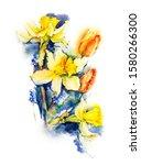 Daffodils And Tulips....