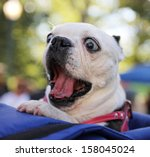 Stock photo a cute dog at a local park 158045024