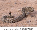 Great Basin Rattlesnake ...