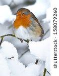 Robin Red Breast Snow Scene