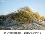 Grasses Growing On Coastal San...