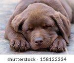 sleeping chocolate labrador... | Shutterstock . vector #158122334