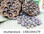 Dry Seed Pods Of Sacred Lotus ...