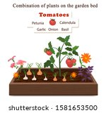 Growing Vegetables And Plants...