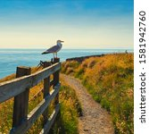 Seagull Perched On The Fence O...