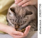 Stock photo unrecognizable woman feeding her tabby cat at home 158207750