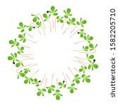 microgreens purslane. arranged...   Shutterstock .eps vector #1582205710