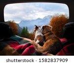 Dogs Camping In The Car. Nova...