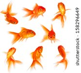 gold fish isolated on a white... | Shutterstock . vector #158296649